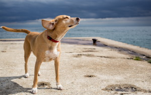 *** Dog On The Beach *** Wide Desktop Background