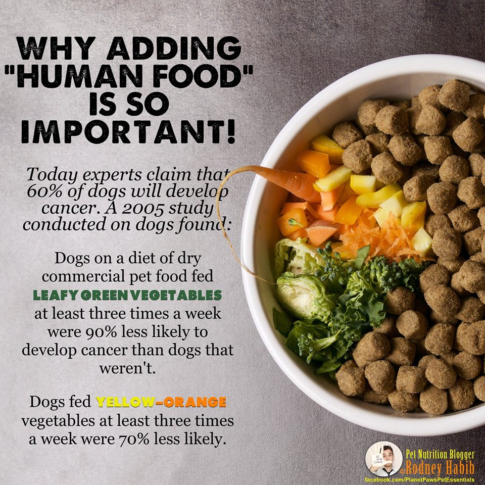 Homemade Dog Food Diet For Cancer